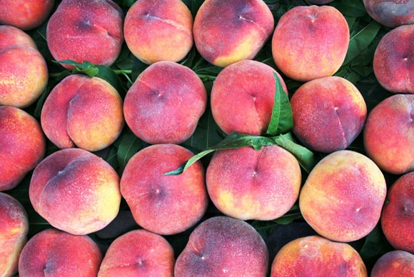 rows of peaches